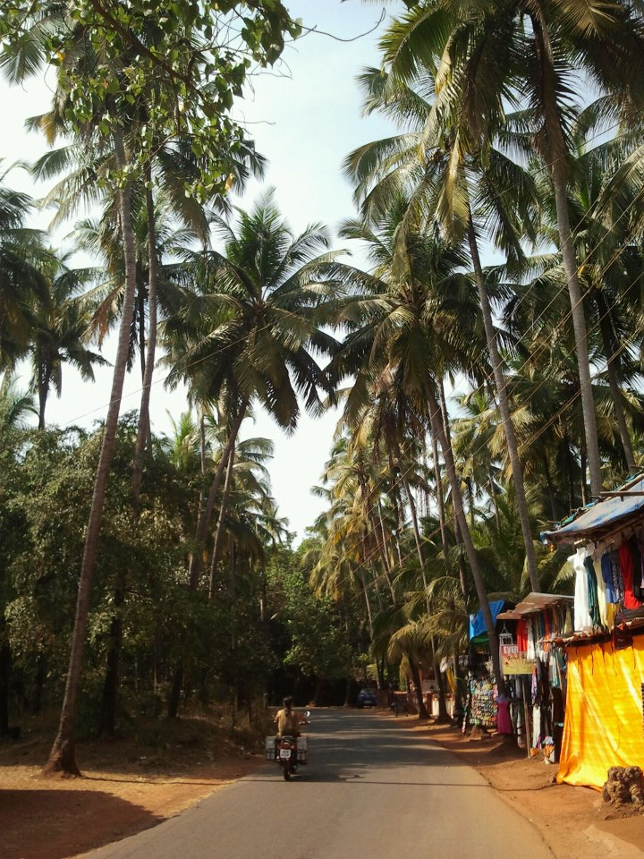 drewmanity-arabian-sea-goa-india-palm-trees-market