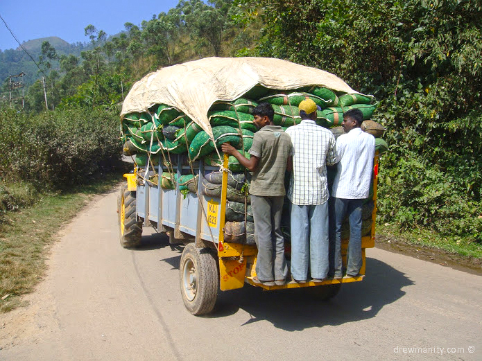 drewmanity-munnar-india-men-on-truck-bags-of-tea-leaves
