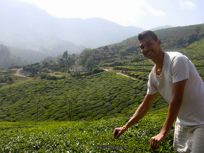 drewmanity-munnar-india-picking-tea-leaves