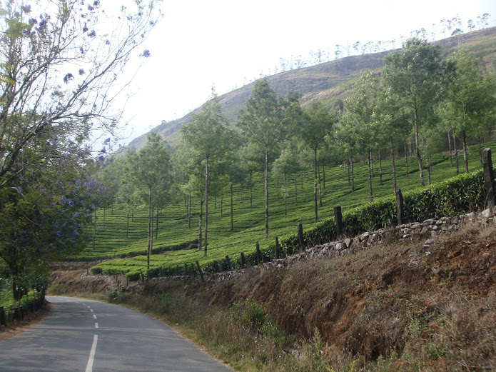 drewmanity-munnar-india-tea-mountains-roads