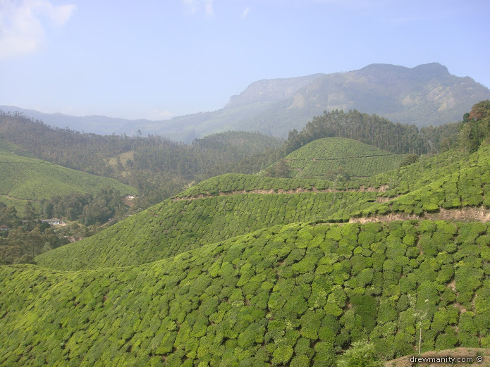 drewmanity-munnar-india-tea-mountains