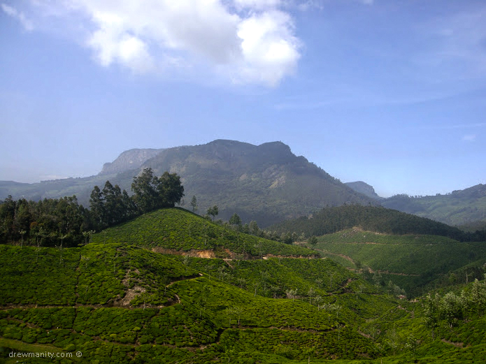 drewmanity-munnar-india-tea-trees-mountains