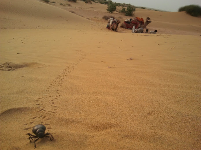 drewmanity-sand-beatle-indian-desert-sands