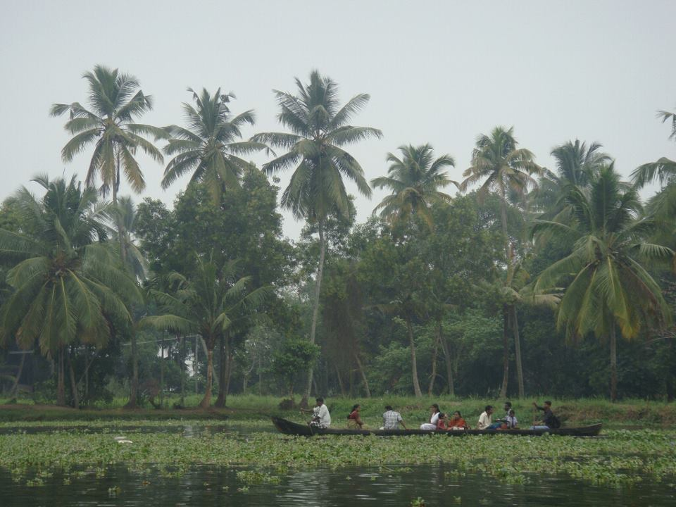 drewmanity.com-india-kerala-backwaters-swamps-and-rice-fields