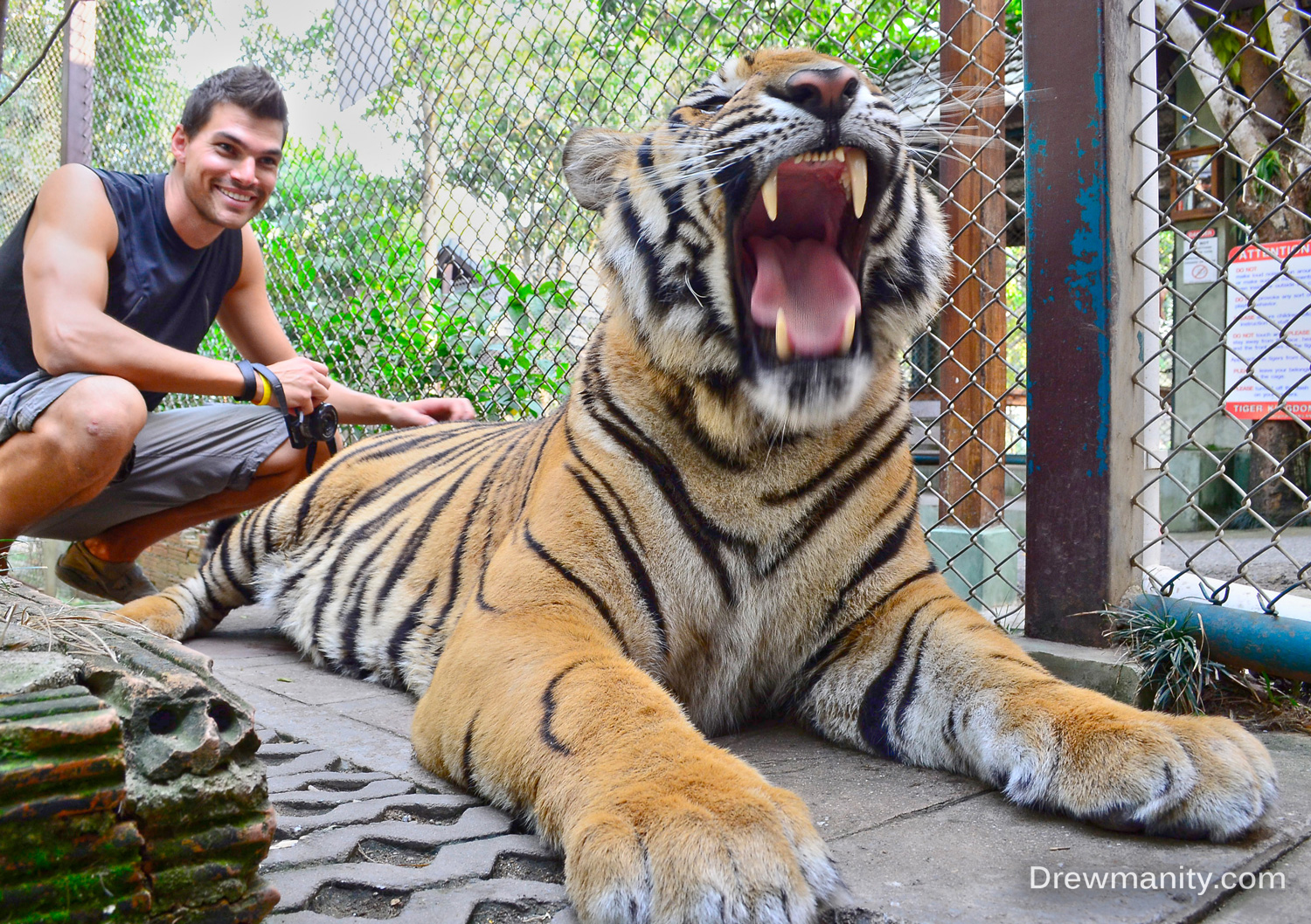A day with the Big Cats – Drewmanity.com
