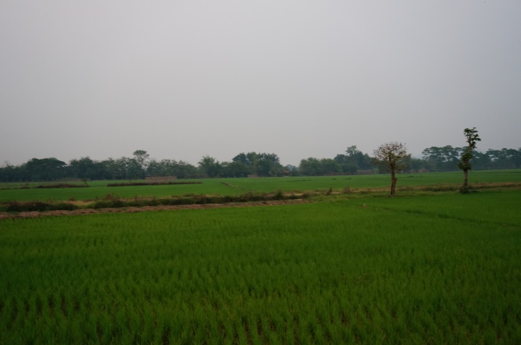 drewmanity.com-golden-triangle-motorbike-ride-thailand-rice-paddies