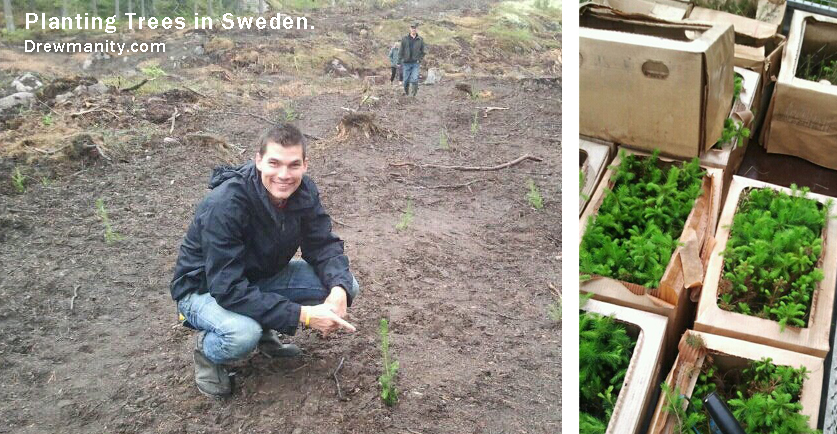 planting-trees-in-sweden-drewmanity.com save the world