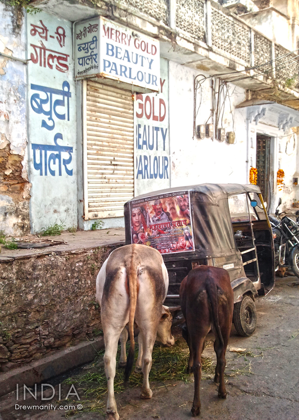 travel-india-indian-street-cows-shop-drewmanity.com