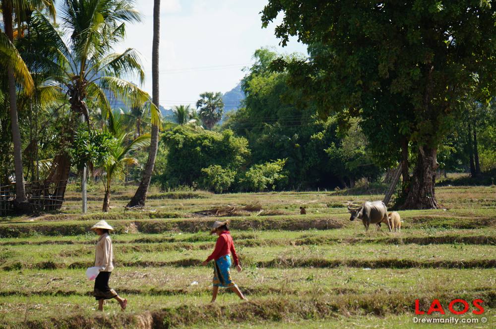 drewmanity.com-laos-rice-paddy-village-people