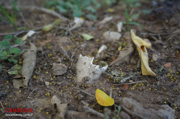Bone fragments still remain from  the mass graves of the Killing fields at Choeung Ek  Phnom Penh, Cambodia.