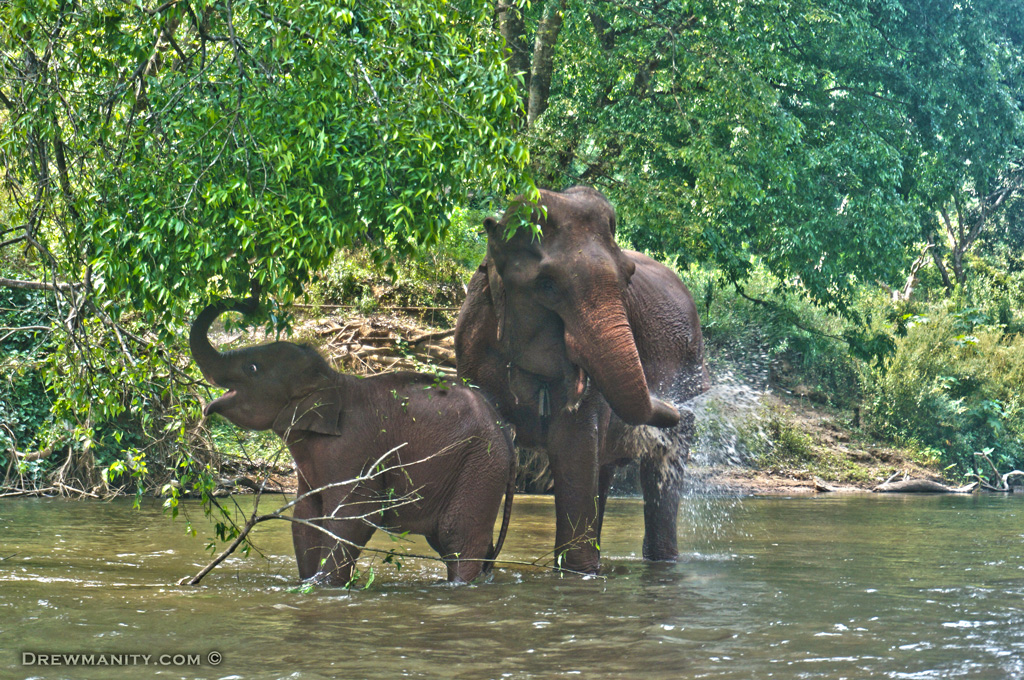 elephant-washing-south-east-asia-travel-drewmanity.com